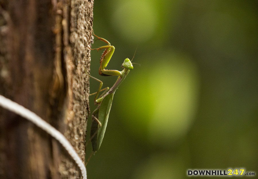 Cairns has some interesting wildlife but we are not the Irwins so let's get on with it...